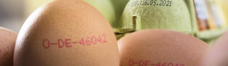Egg printing and carton coding